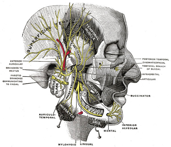 tmj symptoms tension headache and jaw pain healthy sleep texas jaw lymph node diagram migraine headache migraines are typically felt as a unilateral throbbing pain of moderate to severe severity that lasts 4 72 hours
